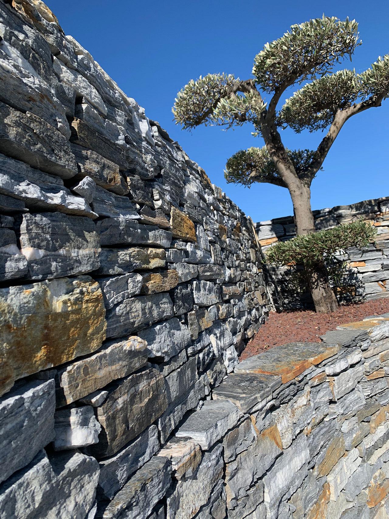 Produktbilder: Mauer, Olivenbaum